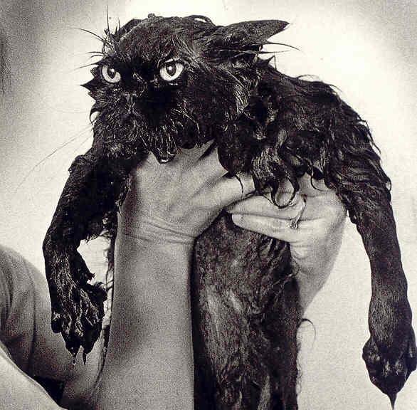 best-pictures-of-wet-cats1.jpg